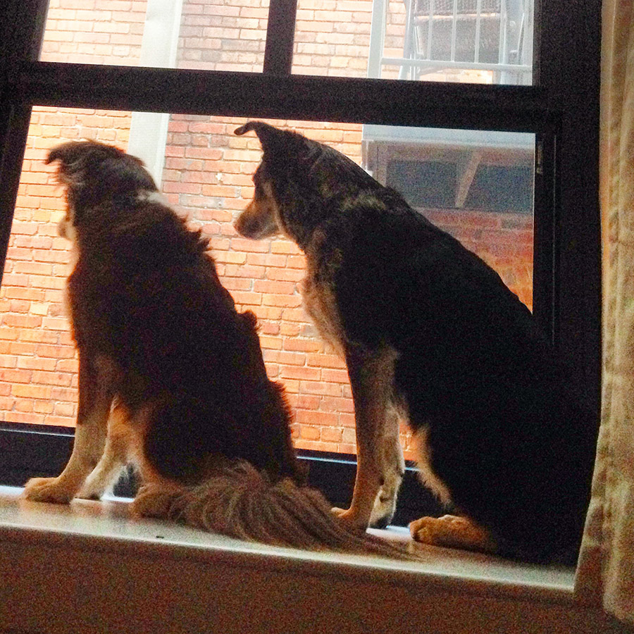 Grnaby-Street-Dogs-In-Window