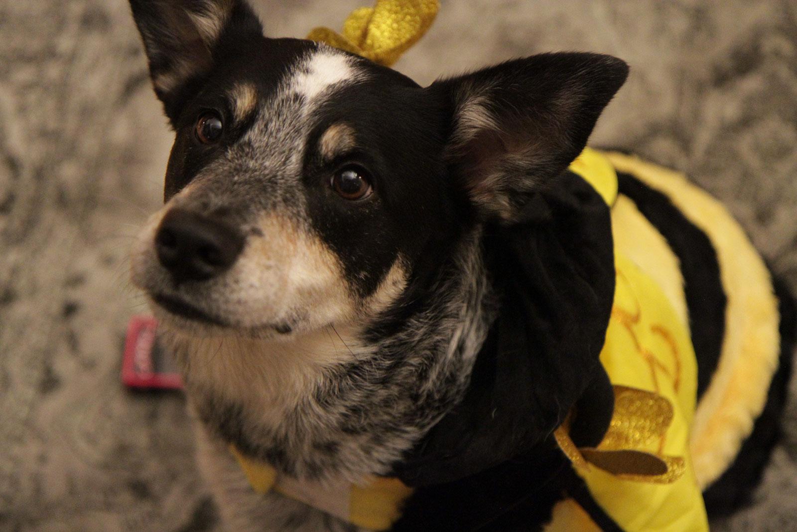 bumblebee-avenue-4
