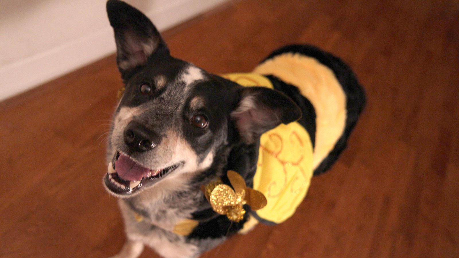 bumblebee-avenue