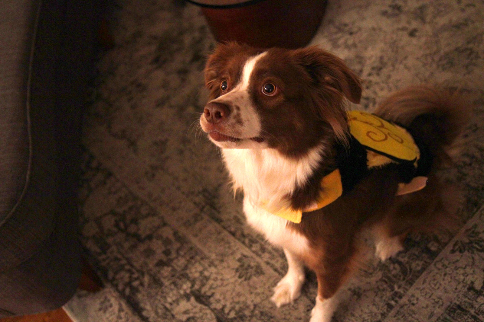 bumblebee-scout-2