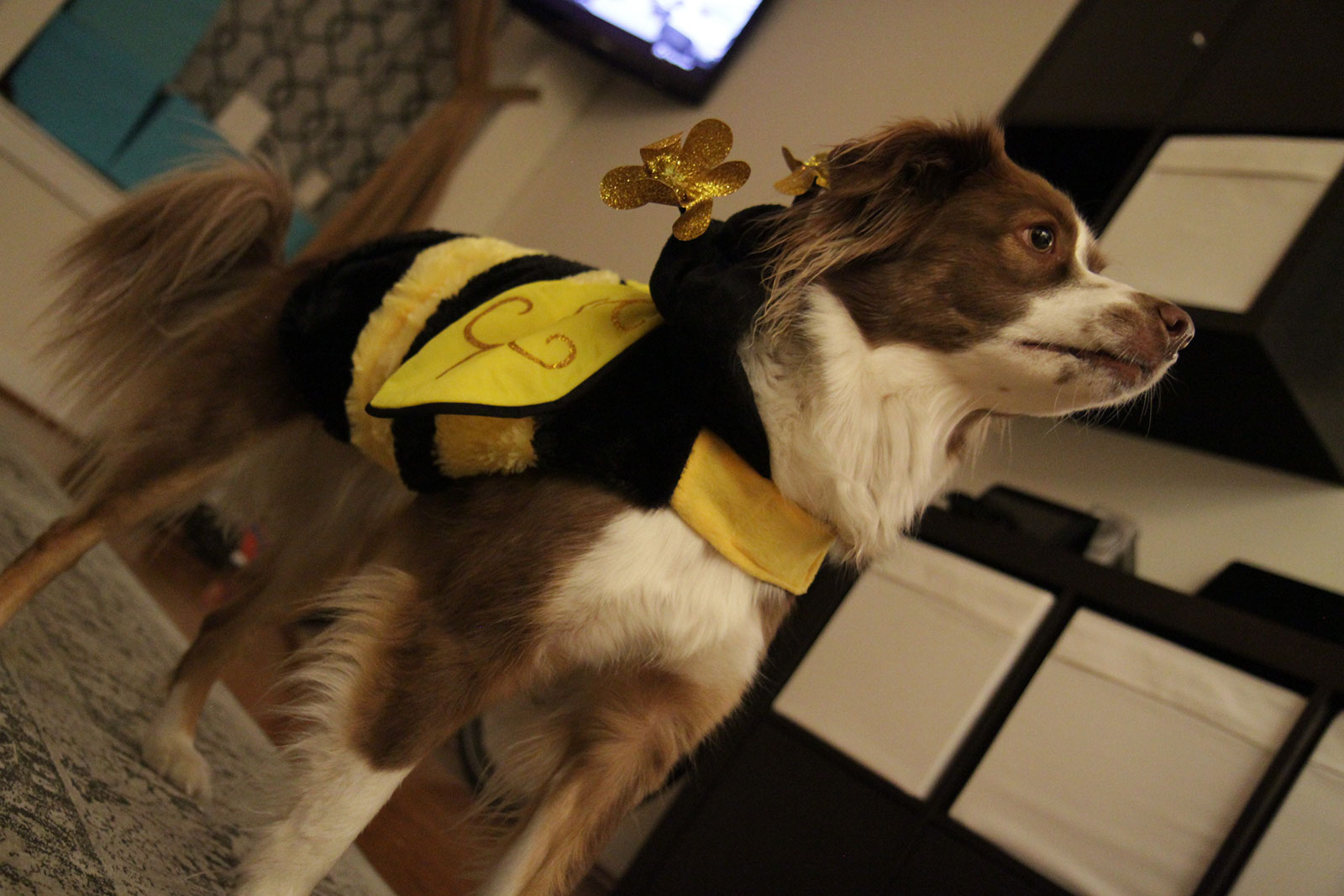 bumblebee-scout