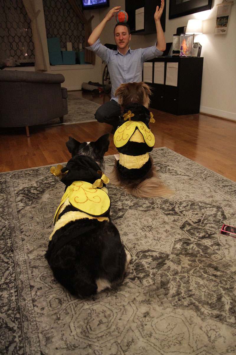 pups-in-costume